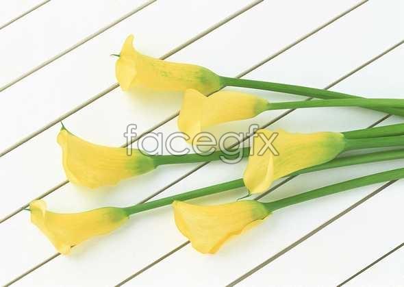 Flowers close-up 1005