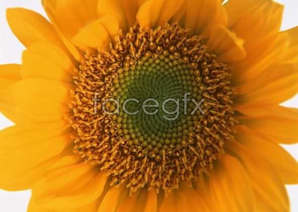 Flowers close-up 113