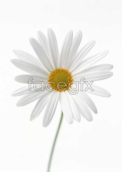 Flowers close-up 1373