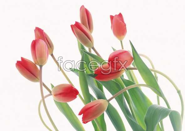 Flowers close-up 1630