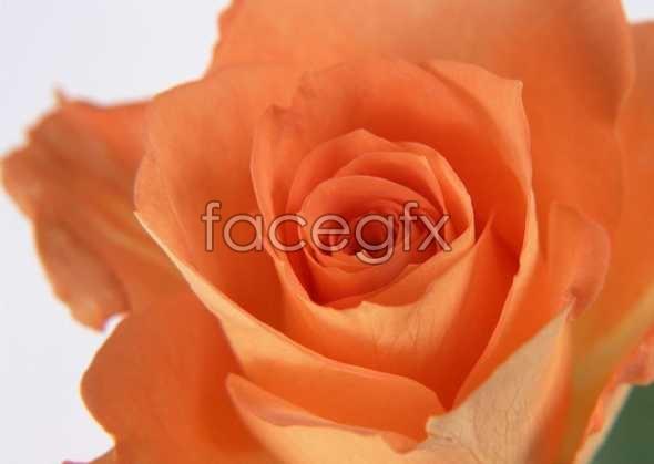 Flowers close-up 172