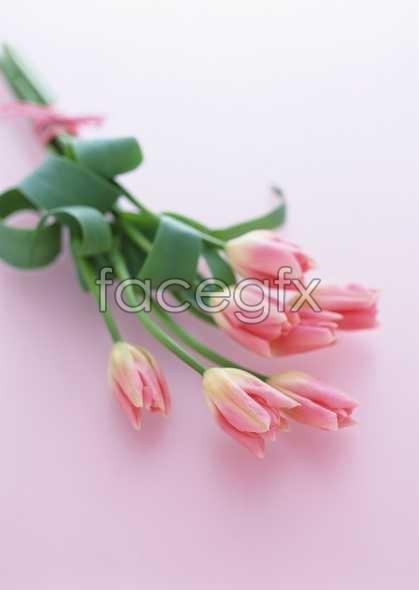 Flowers close-up 1737
