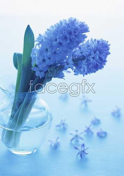 Flowers close-up 1801