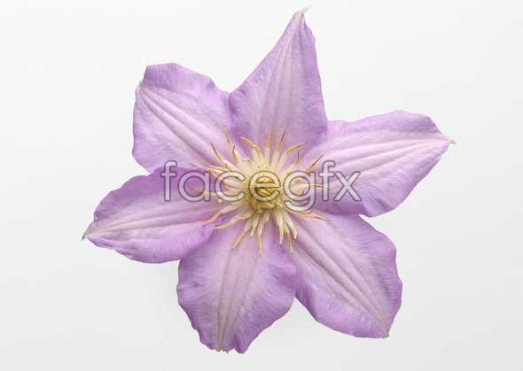 Flowers close-up 478