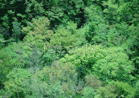 Jungle beauty of 194