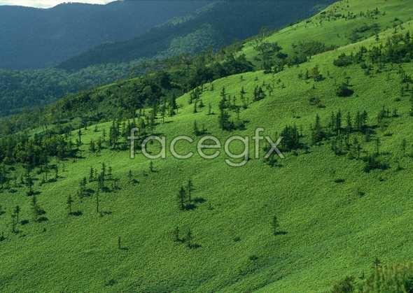 Jungle beauty of 273