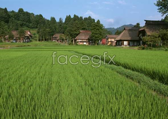Rural scenery pictures