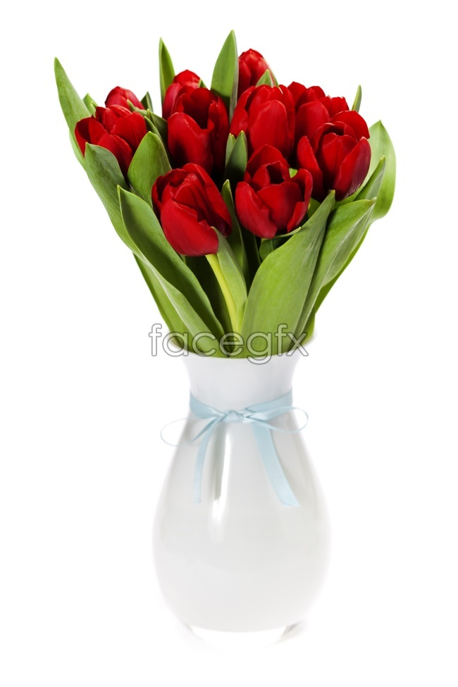 Tulips in a vase pictures