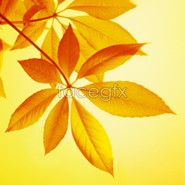 Yellow leaf material picture