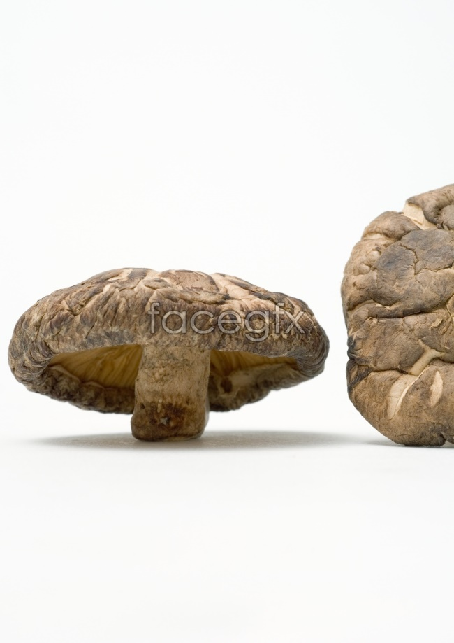 Dried mushrooms-definition pictures