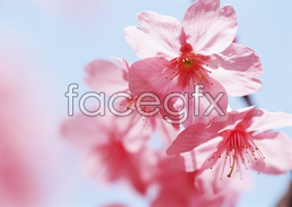 Flowers and pictures of 2,133