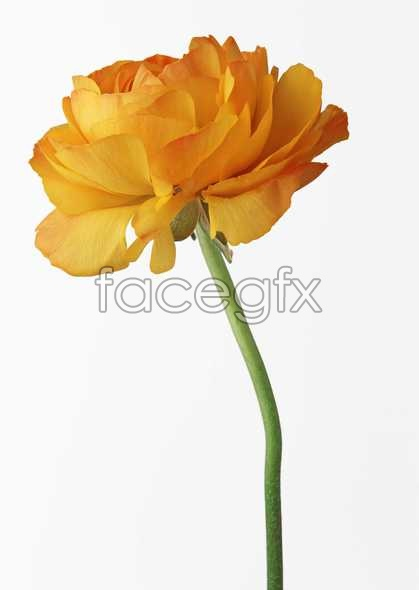 Flowers close-up 499