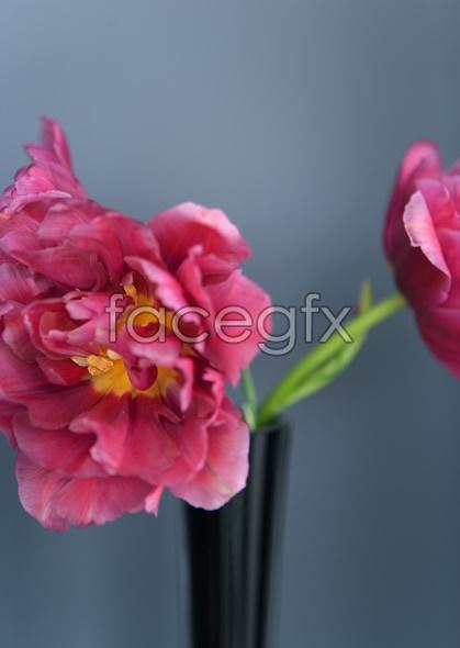 Indoor flower 84