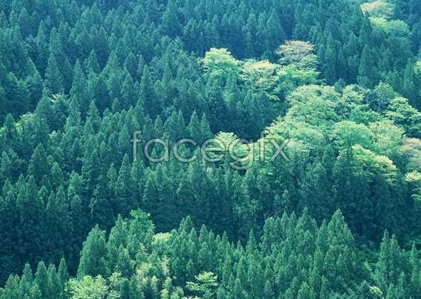 Jungle beauty of 188