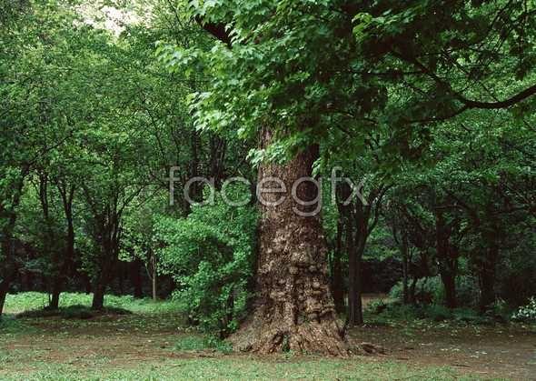 Jungle beauty of 416