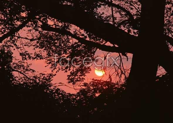 Jungle beauty of 468