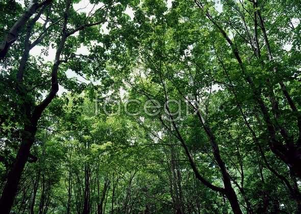 Jungle beauty of 537