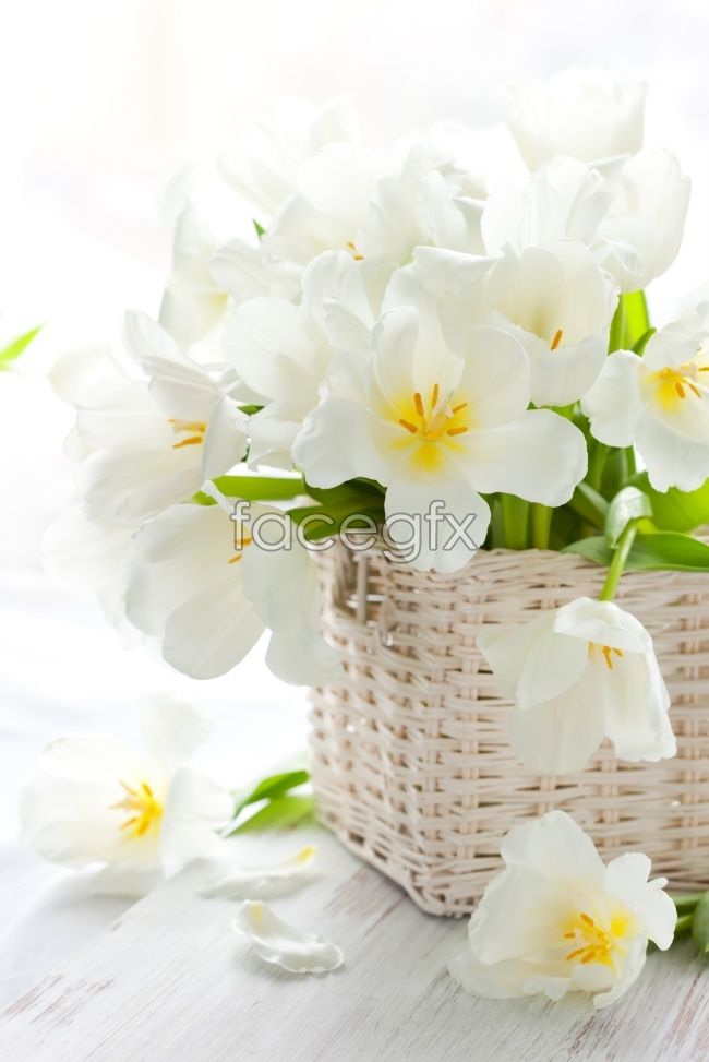 Beautiful and elegant white Orchid picture material