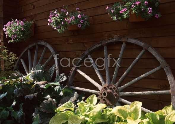 Flowers close-up 1246