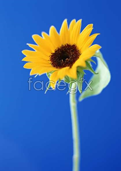 Flowers close-up 1388