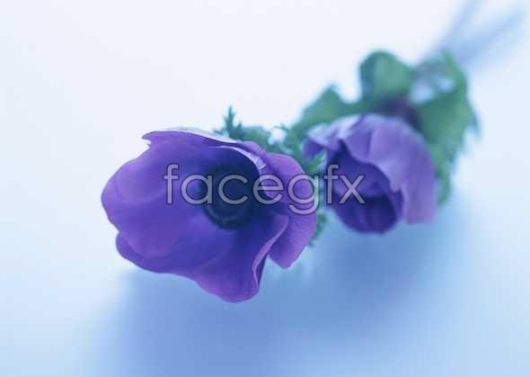 Flowers close-up 1721