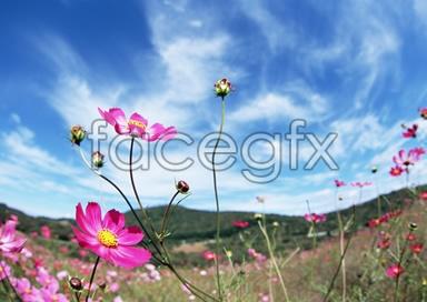 Flowers close-up 2,086