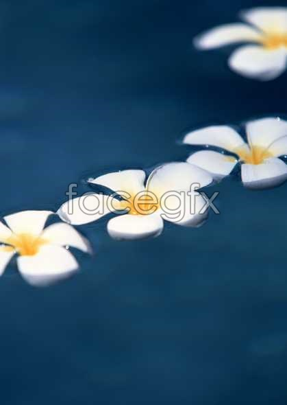 Flowers close-ups of 2033