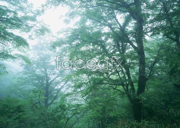 Jungle beauty of 150