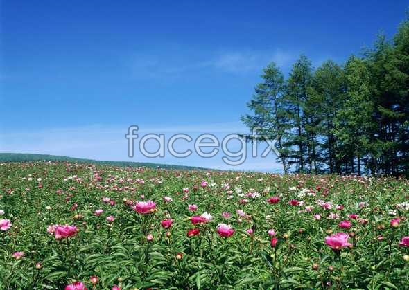 Thousands of flowers 568