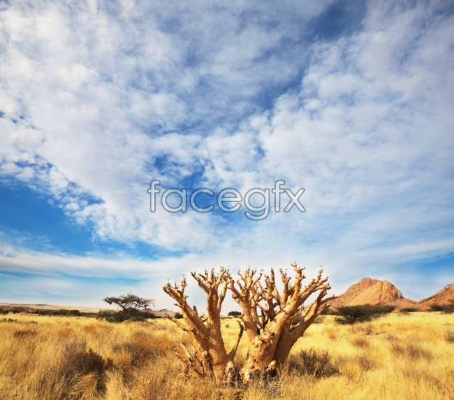 Africa prairie landscape pictures