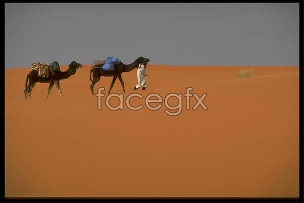 Desert scene 1