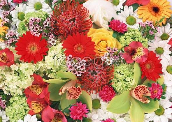 Flowers close-up 1034