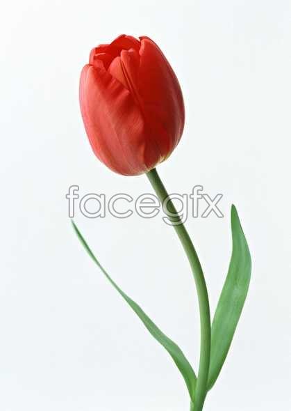 Flowers close-up 1315