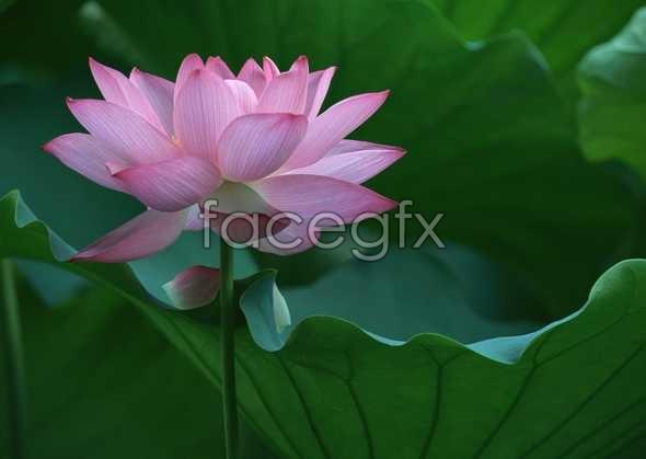Flowers close-up 1604