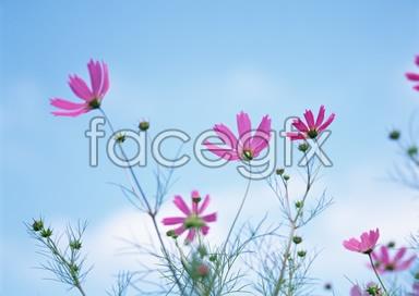 Flowers close-up 2,083