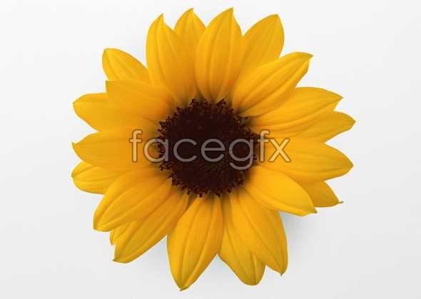 Flowers close-up 424
