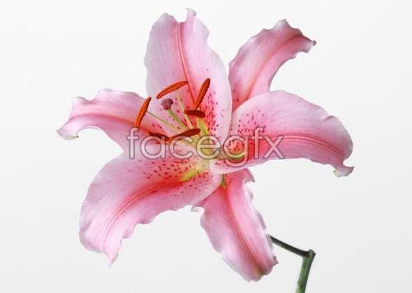 Flowers close-up 459