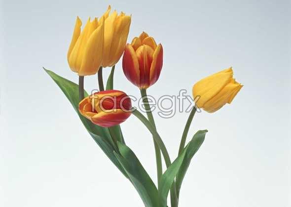 Flowers close-ups 990