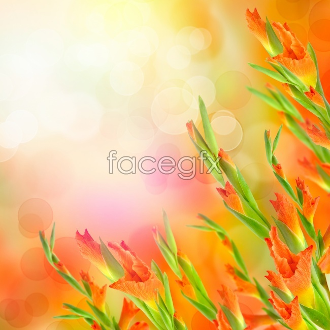 HD red flowers pictures
