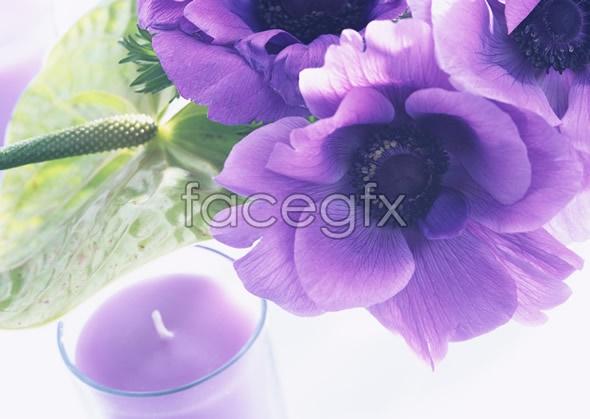 Indoor flower 125