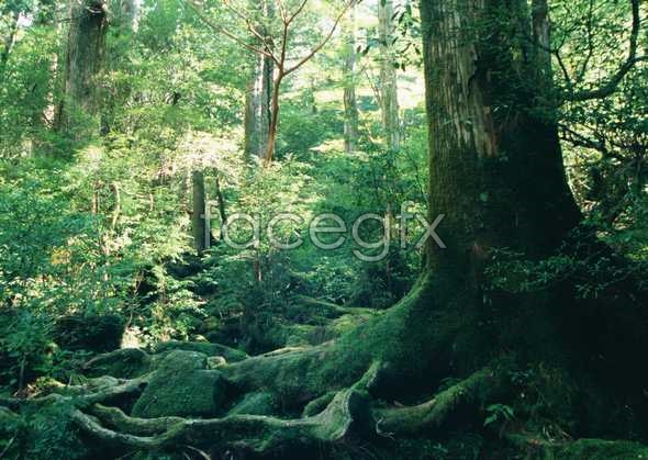 Jungle beauty of 176