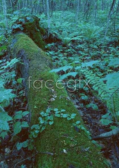 Jungle beauty of 376