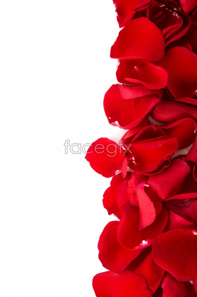 Rose petal background high definition pictures