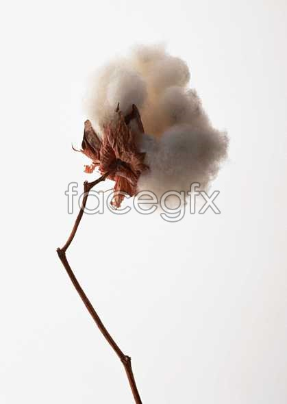 Flowers close-up 1098