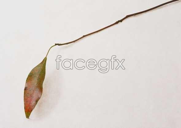 Flowers close-up 1128