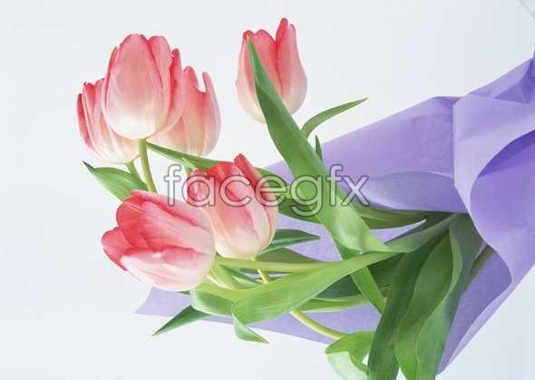 Flowers close-up 131