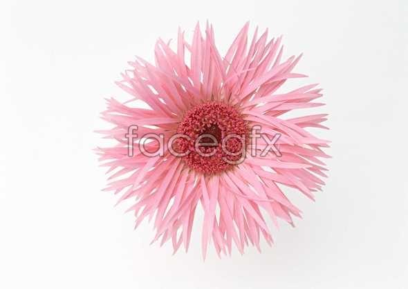 Flowers close-up 1365