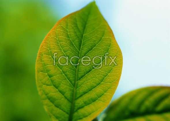 Flowers close-up 339