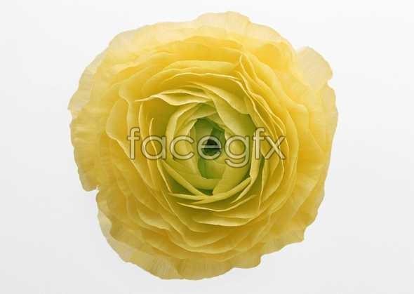 Flowers close-up 408