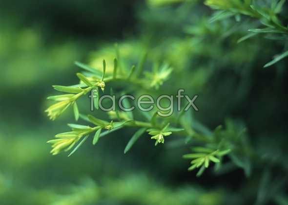Flowers close-up 830
